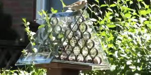 He Makes A Brilliant Squirrel Proof Bird Feeder Unparalleled to Any (Watch!)