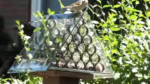 he makes a brilliant squirrel proof bird feeder unparalleled to any