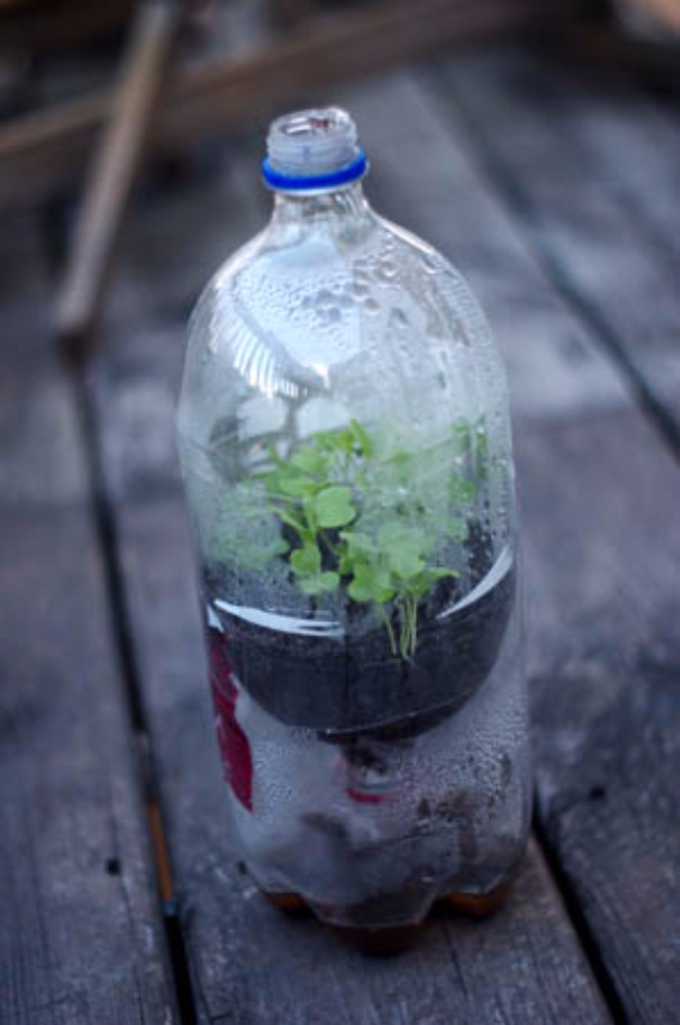 DIY Landscaping Hacks - Soda Bottle Mini Greenhouses - Easy Ways to Make Your Yard and Home Look Awesome in Fall, Winter, Spring and Fall. Backyard Projects for Beginning Gardeners and Lawns - Tutorials and Step by Step Instructions
