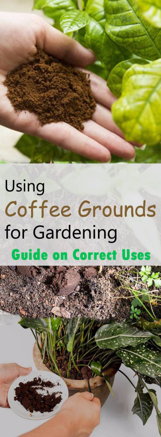 DIY Landscaping Hacks - Use Coffee Grounds To Keep Pests Away - Easy Ways to Make Your Yard and Home Look Awesome in Fall, Winter, Spring and Fall. Backyard Projects for Beginning Gardeners and Lawns - Tutorials and Step by Step Instructions