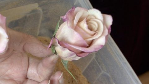 She Shows Us How To Preserve Those Beautiful Flowers You Receive On Special Occasions!   DIY Joy Projects and Crafts Ideas