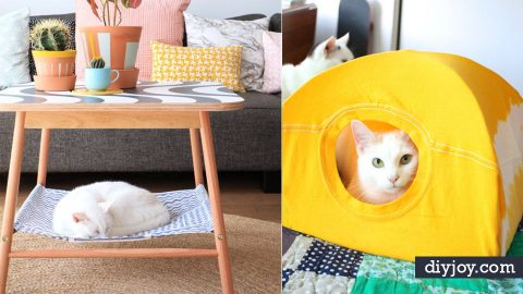 31 Brilliantly Clever Cat Hacks | DIY Joy Projects and Crafts Ideas