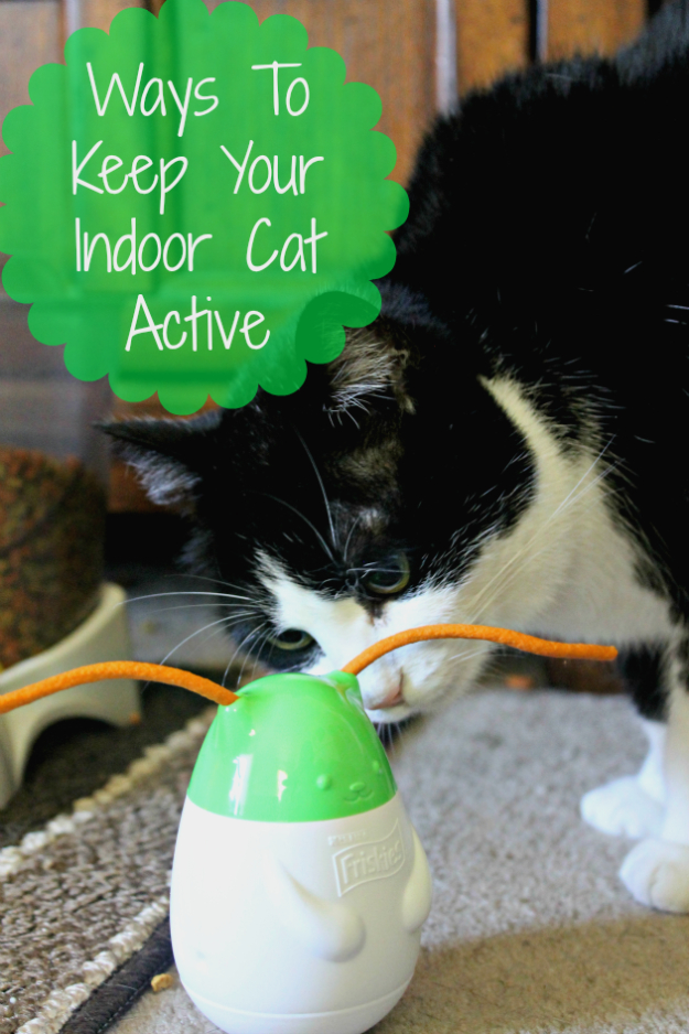 DIY Cat Hacks - 4 Ways To Keep Your Indoor Cat Activev - Tips and Tricks Ideas for Cat Beds and Toys, Homemade Remedies for Fleas and Scratching - Do It Yourself Cat Treat Recips, Food and Gear for Your Pet - Cool Gifts for Cats http://diyjoy.com/diy-cat-hacks