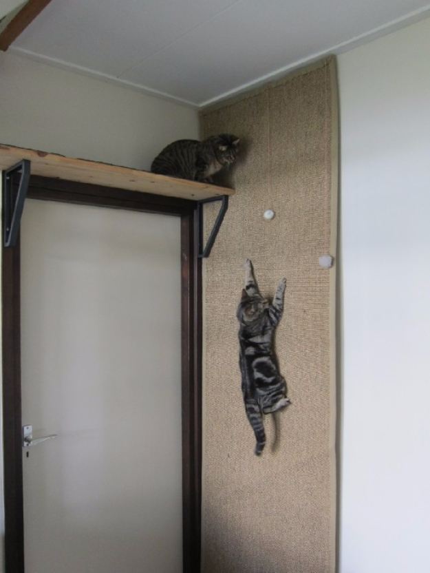 DIY Cat Hacks - Climbing Wall For Cats - Tips and Tricks Ideas for Cat Beds and Toys, Homemade Remedies for Fleas and Scratching - Do It Yourself Cat Treat Recips, Food and Gear for Your Pet - Cool Gifts for Cats http://diyjoy.com/diy-cat-hacks