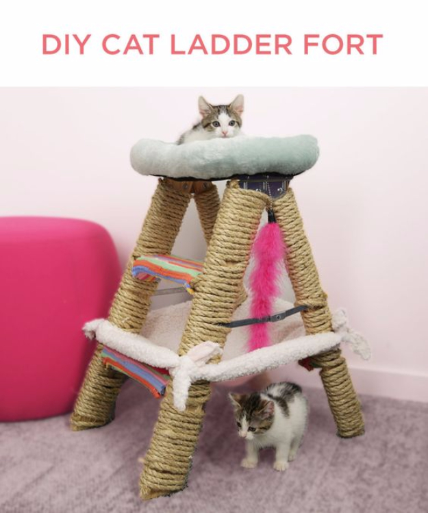 Cheap DIY Cat Toys - DIY Cat Ladder Fort - Tips and Tricks Ideas for Cat Beds and Toys, Homemade Remedies for Fleas and Scratching - Do It Yourself Cat Treat Recips, Food and Gear for Your Pet - Cool Gifts for Cats