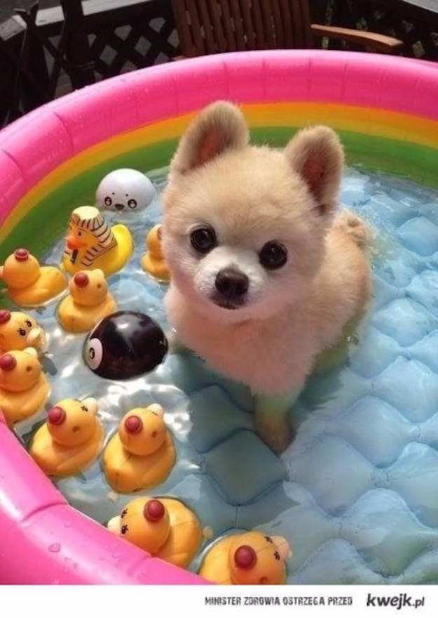 DIY Dog Hacks - Fill An Inflatable Pool With Water And Ice On Hot Summer Days - Training Tips, Ideas for Dog Beds and Toys, Homemade Remedies for Fleas and Scratching - Do It Yourself Dog Treat Recips, Food and Gear for Your Pet #dogs #diy #crafts