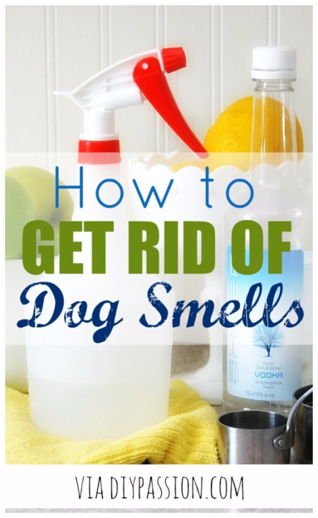 DIY Dog Hacks - Get Rid Of Dog Smells - Training Tips, Ideas for Dog Beds and Toys, Homemade Remedies for Fleas and Scratching - Do It Yourself Dog Treat Recips, Food and Gear for Your Pet #dogs #diy #crafts
