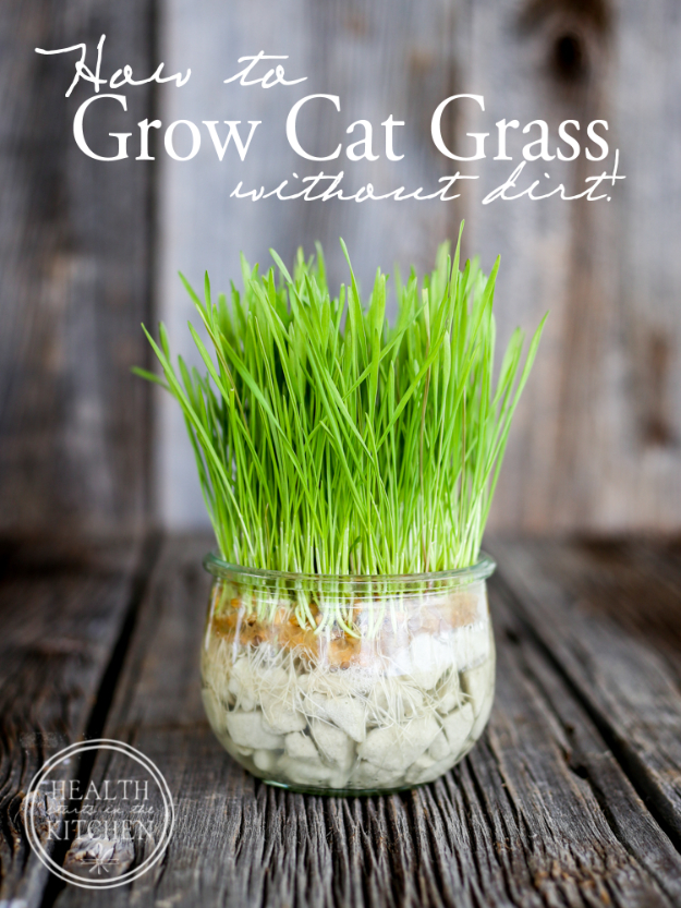 DIY Cat Hacks - Grow Cat Grass Without Dirt - Tips and Tricks Ideas for Cat Beds and Toys, Homemade Remedies for Fleas and Scratching - Do It Yourself Cat Treat Recips, Food and Gear for Your Pet - Cool Gifts for Cats http://diyjoy.com/diy-cat-hacks
