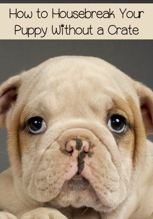 DIY Dog Hacks - Housebreak Your Puppy Without a Crate - Training Tips, Ideas for Dog Beds and Toys, Homemade Remedies for Fleas and Scratching - Do It Yourself Dog Treat Recips, Food and Gear for Your Pet #dogs #diy #crafts