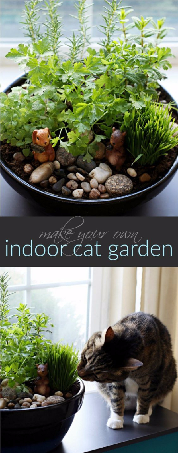 DIY Cat Hacks - Make Your Own Cat Indoor Catnip Garden - Tips and Tricks Ideas for Cat Beds and Toys, Homemade Remedies for Fleas and Scratching - Do It Yourself Cat Treat Recips, Food and Gear for Your Pet - Cool Gifts for Cats