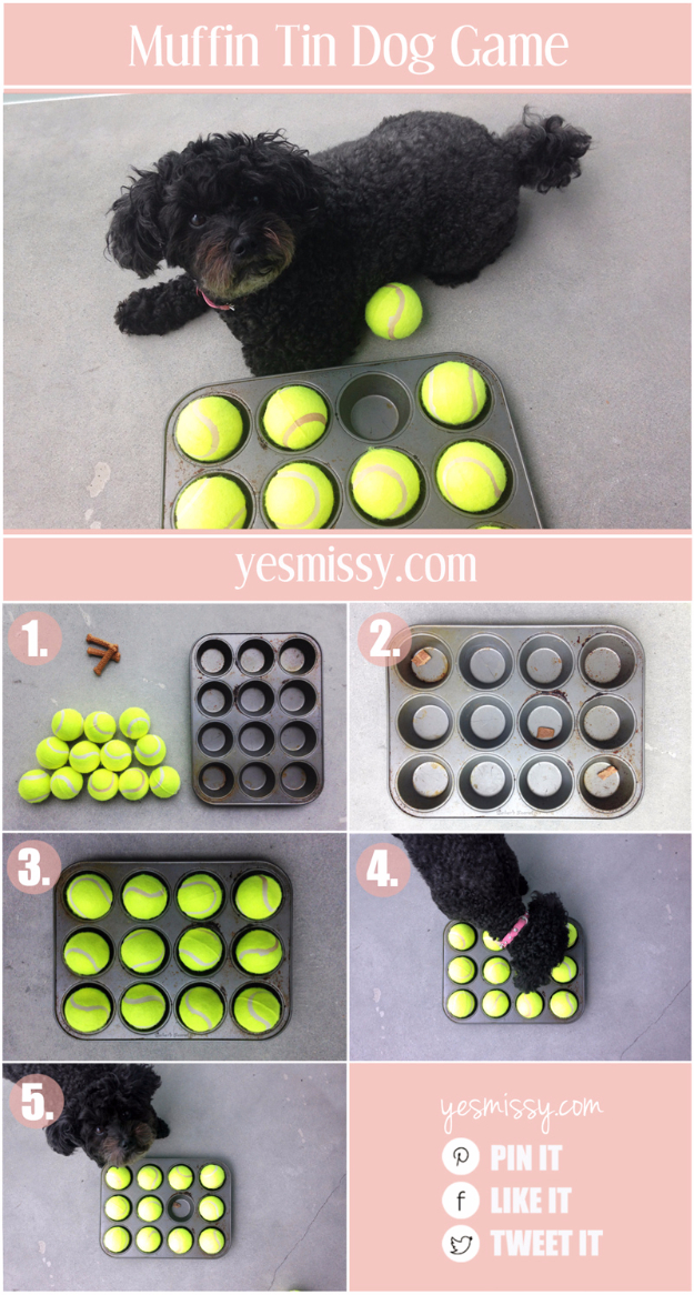 DIY Dog Hacks - Muffin Tin Dog Game - Training Tips, Ideas for Dog Beds and Toys, Homemade Remedies for Fleas and Scratching - Do It Yourself Dog Treat Recips, Food and Gear for Your Pet #dogs #diy #crafts