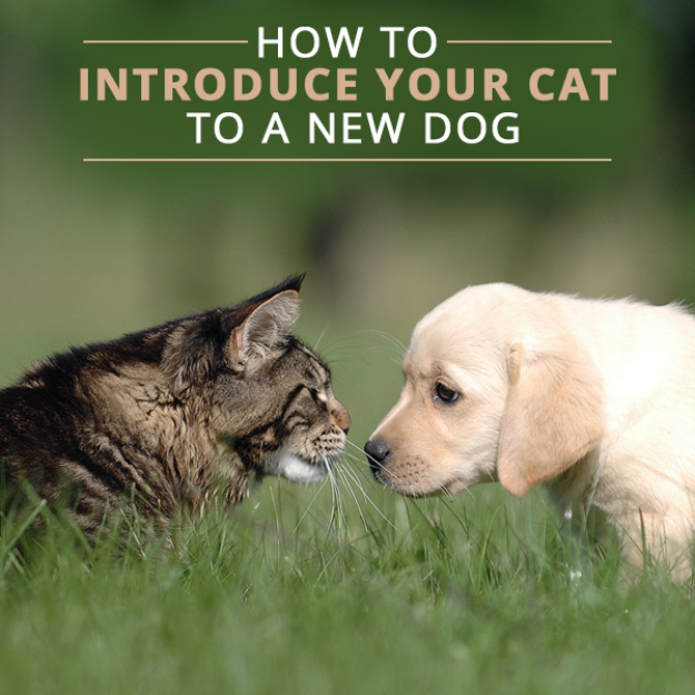 DIY Cat Hacks - Properly Introduce Your Cat To A New Dog - Tips and Tricks Ideas for Cat Beds and Toys, Homemade Remedies for Fleas and Scratching - Do It Yourself Cat Treat Recips, Food and Gear for Your Pet - Cool Gifts for Cats http://diyjoy.com/diy-cat-hacks