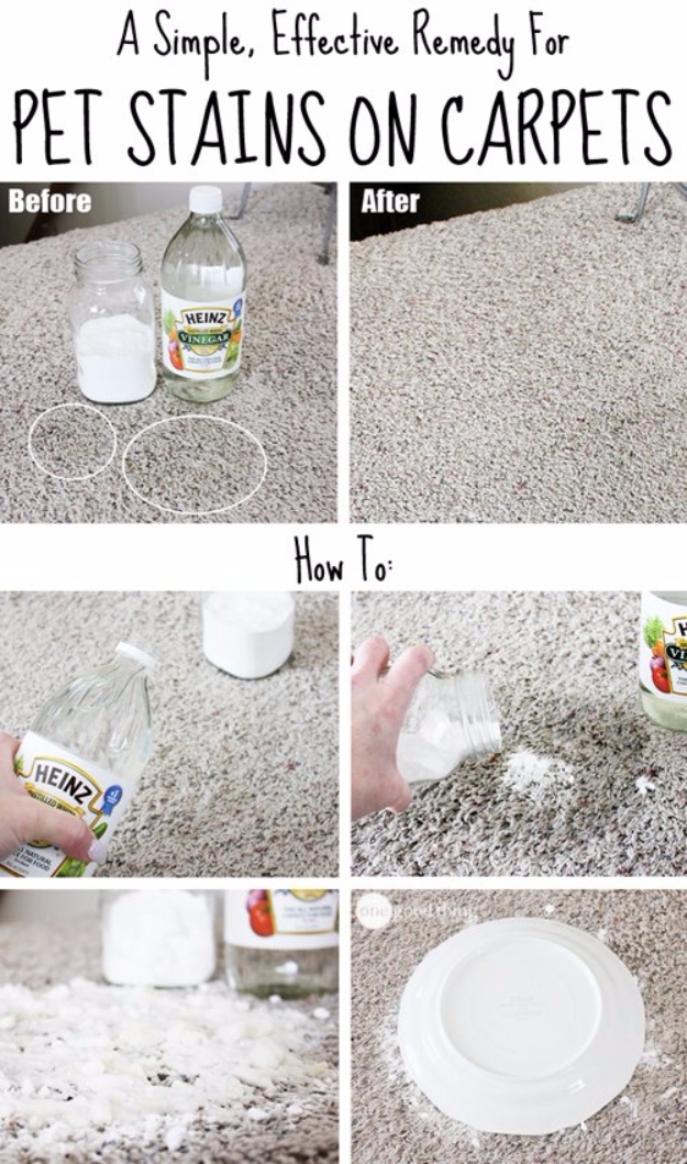 DIY Dog Hacks - Remove Pet Stains From The Carpet - Training Tips, Ideas for Dog Beds and Toys, Homemade Remedies for Fleas and Scratching - Do It Yourself Dog Treat Recips, Food and Gear for Your Pet #dogs #diy #crafts