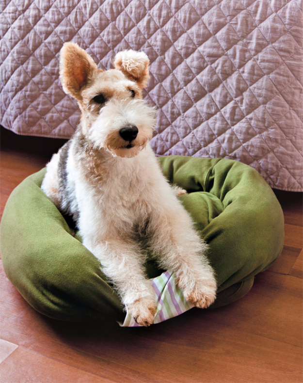 DIY Dog Hacks - Sweatshirt Pet Bed - Training Tips, Ideas for Dog Beds and Toys, Homemade Remedies for Fleas and Scratching - Do It Yourself Dog Treat Recips, Food and Gear for Your Pet #dogs #diy #crafts