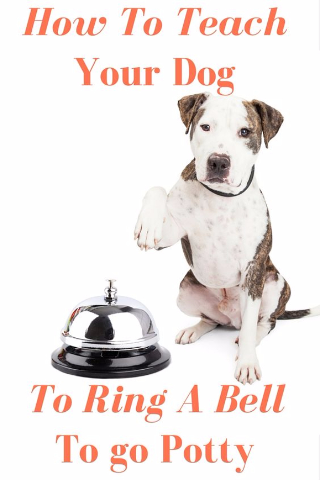 DIY Dog Hacks - Train Your Dog To Ring A Bell To Go Potty - Training Tips, Ideas for Dog Beds and Toys, Homemade Remedies for Fleas and Scratching - Do It Yourself Dog Treat Recips, Food and Gear for Your Pet http://diyjoy.com/diy-dog-hacks
