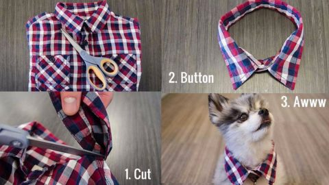 33 Dog Hacks You Need To Try Immediately | DIY Joy Projects and Crafts Ideas