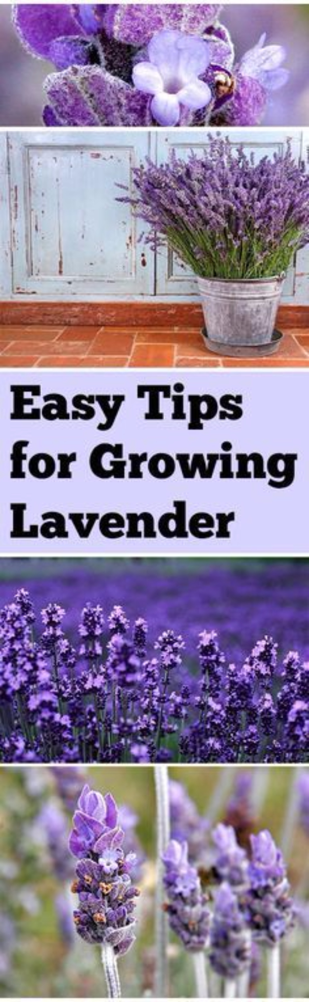 DIY Spring Gardening Projects - Easy Tips for Growing Lavender - Cool and Easy Planting Tips for Spring Garden - Step by Step Tutorials for Growing Seeds, Plants, Vegetables and Flowers in You Yard - DIY Project Ideas for Women and Men - Creative and Quick Backyard Ideas For Summer