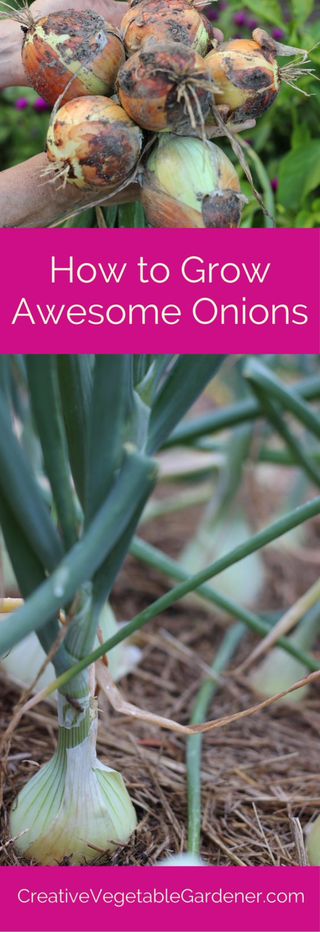 DIY Spring Gardening Projects - Plant And Grow Onions - Cool and Easy Planting Tips for Spring Garden - Step by Step Tutorials for Growing Seeds, Plants, Vegetables and Flowers in You Yard - DIY Project Ideas for Women and Men - Creative and Quick Backyard Ideas For Summer