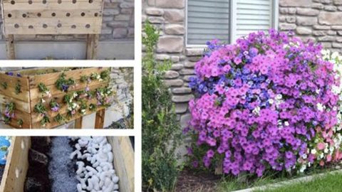 Watch How She Builds An Outrageously Beautiful Planter Box Out Of Pallets! | DIY Joy Projects and Crafts Ideas