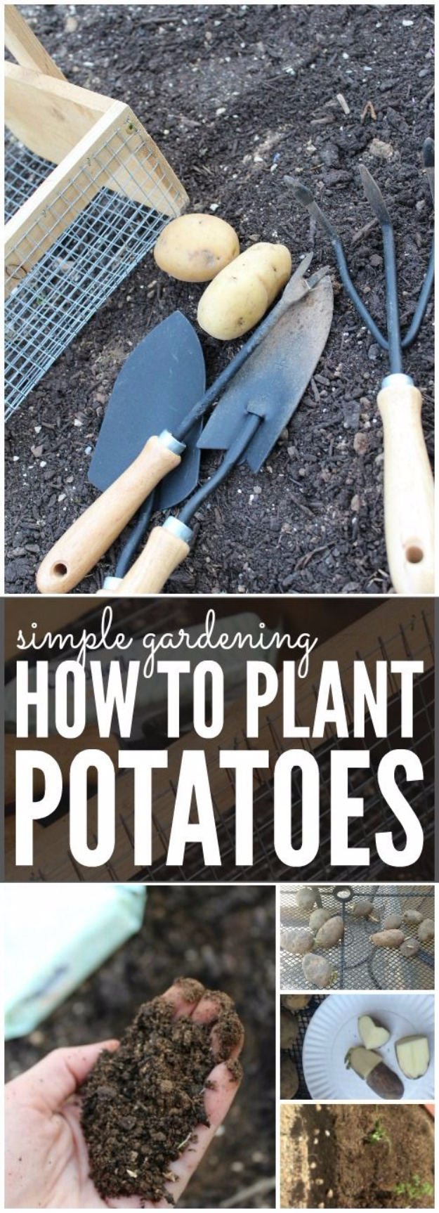 DIY Spring Gardening Projects - Planting Potatoes For Spring - Cool and Easy Planting Tips for Spring Garden - Step by Step Tutorials for Growing Seeds, Plants, Vegetables and Flowers in You Yard - DIY Project Ideas for Women and Men - Creative and Quick Backyard Ideas For Summer http://diyjoy.com/diy-spring-gardening