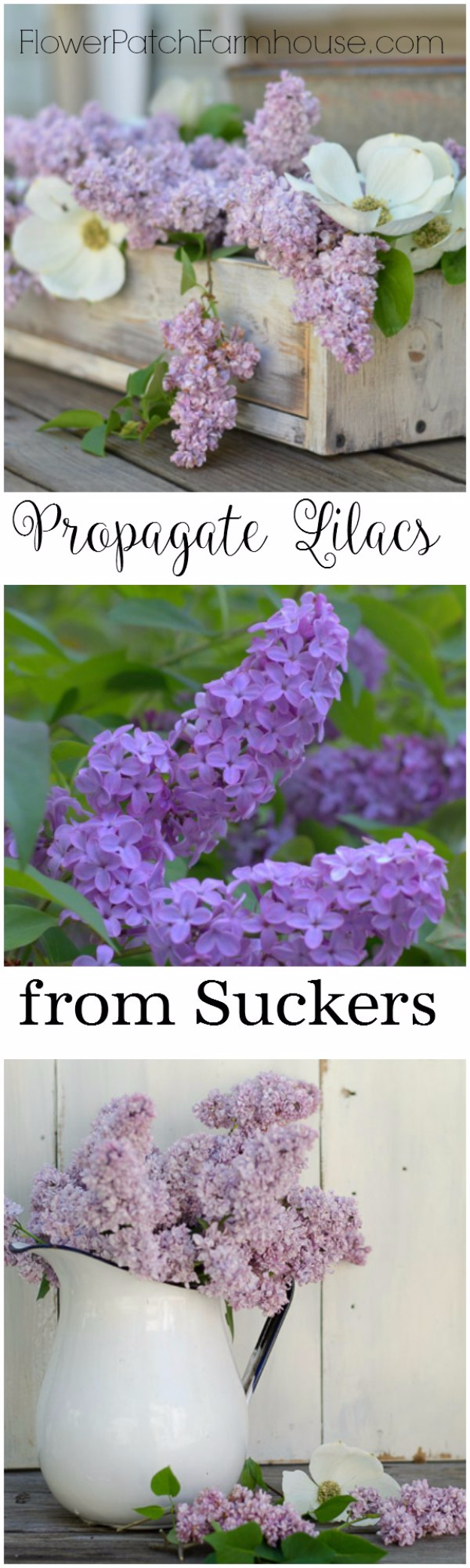 DIY Spring Gardening Projects - Propagate Lilacs From Suckers - Cool and Easy Planting Tips for Spring Garden - Step by Step Tutorials for Growing Seeds, Plants, Vegetables and Flowers in You Yard - DIY Project Ideas for Women and Men - Creative and Quick Backyard Ideas For Summer