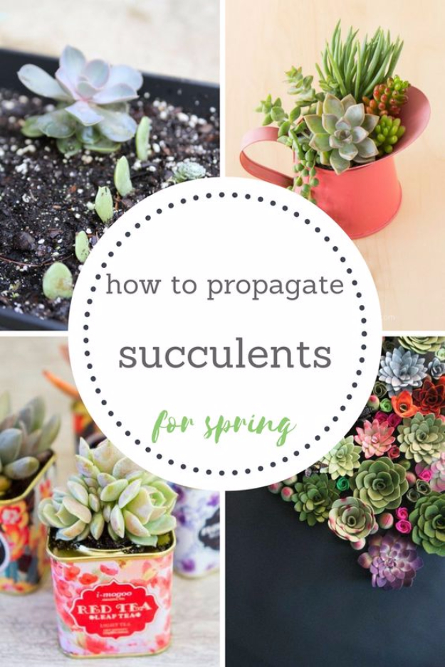 DIY Spring Gardening Projects - Propagate Succulents For Spring - Cool and Easy Planting Tips for Spring Garden - Step by Step Tutorials for Growing Seeds, Plants, Vegetables and Flowers in You Yard - DIY Project Ideas for Women and Men - Creative and Quick Backyard Ideas For Summer