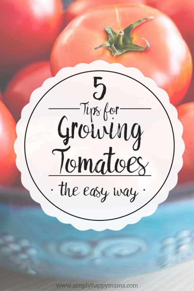 DIY Spring Gardening Projects - Tips For Growing Tomatoes - Cool and Easy Planting Tips for Spring Garden - Step by Step Tutorials for Growing Seeds, Plants, Vegetables and Flowers in You Yard - DIY Project Ideas for Women and Men - Creative and Quick Backyard Ideas For Summer
