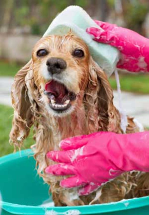 DIY Dog Grooming Tutorials - Bathing A Dog - Cool and Easy Ways to Wash, Groom and Style Your Pets Fur - Trim Toenails, Brush Teeth, Bath, Trim and Clip Dogs Fur - Hair - Remove Fleas and Anti Itch - Save Money At The Groomer By Learning How To Do These Things At Home #diy #pets #dog
