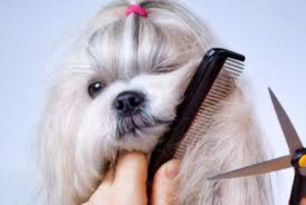 DIY Dog Grooming Tutorials - Brushing, Trimming, And Thinning Tails - Cool and Easy Ways to Wash, Groom and Style Your Pets Fur - Trim Toenails, Brush Teeth, Bath, Trim and Clip Dogs Fur - Hair - Remove Fleas and Anti Itch - Save Money At The Groomer By Learning How To Do These Things At Home #diy #pets #dog