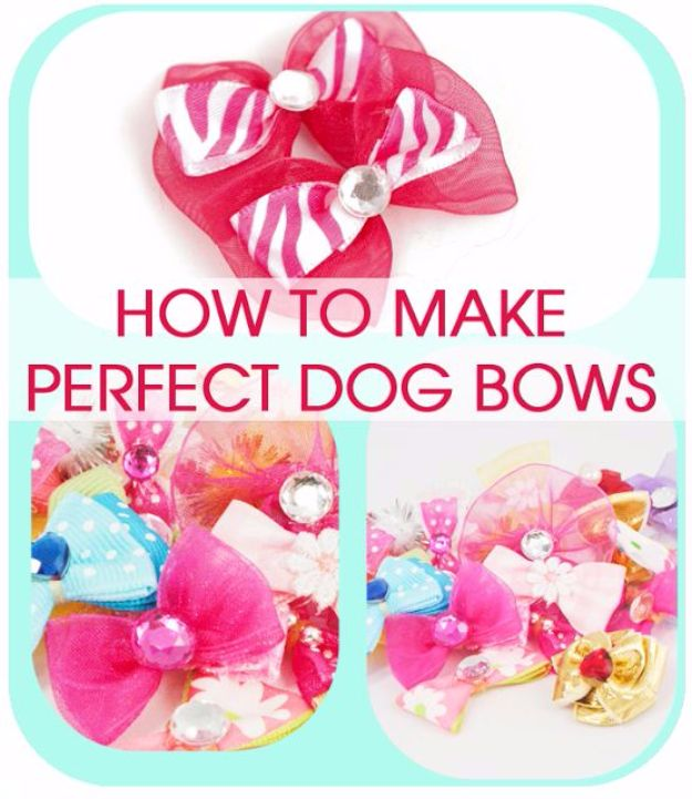 DIY Dog Grooming Tutorials - How to Make Dog Bows - Cool and Easy Ways to Wash, Groom and Style Your Pets Fur - Trim Toenails, Brush Teeth, Bath, Trim and Clip Dogs Fur - Hair - Remove Fleas and Anti Itch - Save Money At The Groomer By Learning How To Do These Things At Home #diy #pets #dog