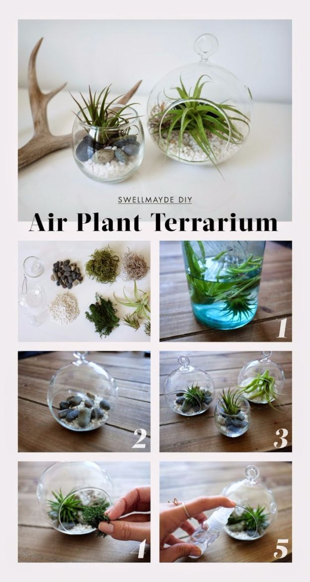 DIY Terrarium Ideas - Air Plant Terrarium - Cool Terrariums and Crafts With Mason Jars, Succulents, Wood, Geometric Designs and Reptile, Acquarium - Easy DIY Terrariums for Adults and Kids To Make at Home http://diyjoy.com/diy-terrarium-ideas