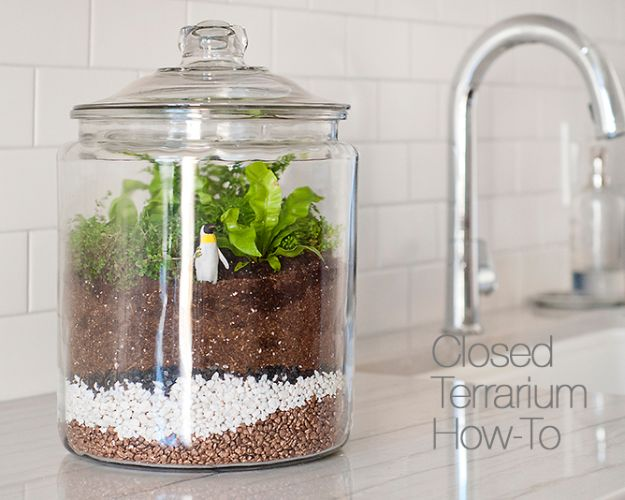DIY Terrarium Ideas - Closed Terrarium - Cool Terrariums and Crafts With Mason Jars, Succulents, Wood, Geometric Designs and Reptile, Acquarium - Easy DIY Terrariums for Adults and Kids To Make at Home