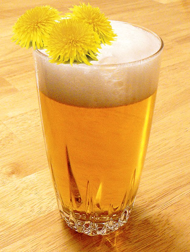 Best Homemade Beer Recipes - Dandelion Beer - Easy Homebrew Drinks and Brewing Tutorials for Craft Beers Made at Home - IPA, Summer, Red, Lager and Ales - Instructions and Step by Step Tutorials for Making Beer at Home http://diyjoy.com/homemade-beer-recipes