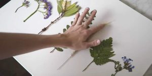 Watch What He Does After He Presses These Flowers, Plus The Other 9 Great DIY Decor Ideas!