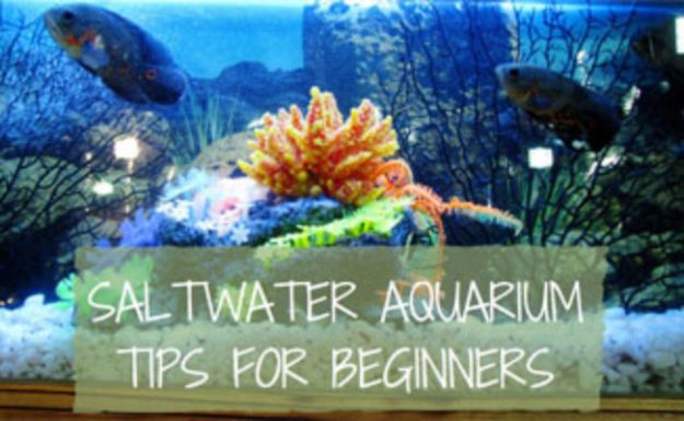 DIY Aquarium Ideas - Saltwater Aquarium - Cool and Easy Decorations for Tank Aquariums, Mason Jar, Wall and Stand Projects for Fish - Creative Background Ideas - Fun Tutorials for Kids to Make With Plants and Decor - Best Home Decor and Crafts by DIY JOY