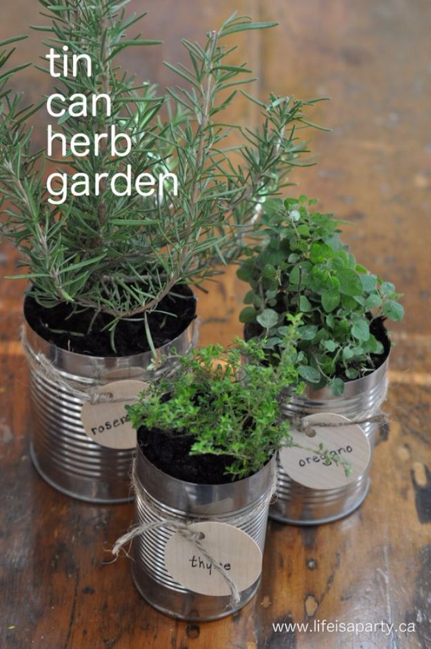 DIY Ideas With Old Tin Cans - Tin can Herb Garden - Rustic Farmhouse Decor Tutorials and Projects Made With An Old Tin Can - Easy Vintage Shelving, Wall Art, Picture Frames and Home Decor for Kitchen, Living Room and Bathroom - Creative Country Crafts, Craft Room Storage, Silverware Holder, Rustic Wall Art and Accessories to Make and Sell