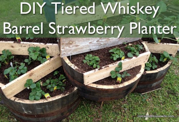 DIY Ideas With Old Barrels - Tiered Whiskey Barrel Strawberry Planter - Rustic Farmhouse Decor Tutorials and Projects Made With a Barrel - Easy Vintage Home Decor for Kitchen, Living Room and Bathroom - Creative Country Crafts, Dog Beds, Seating, Furniture, Patio Decor and Rustic Wall Art and Accessories to Make and Sell tp://diyjoy.com/diy-projects-old-barrels