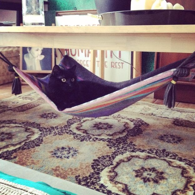 DIY Ideas With Old Towels - Magic Carpet Cat Hammock From An Old Towel - Cool Crafts To Make With An Old Towel - Cheap Do It Yourself Gifts and Home Decor on A Budget - Creative But Cheap Ideas for Decorating Your House and Room - Upcycle Those Towels Instead of Throwing Them Away! http://diyjoy.com/diy-ideas-old-towels