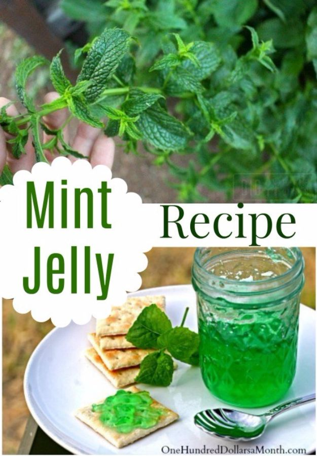 Best Jam and Jelly Recipes - Mint Jelly - Homemade Recipe Ideas For Canning - Easy and Unique Jams and Jellies Made With Strawberry, Raspberry, Blackberry, Peach and Fruit - Healthy, Sugar Free, No Pectin, Small Batch, Savory and Freezer Recipes http://diyjoy.com/jam-jelly-recipes