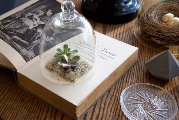 Last Minute Christmas Gifts - Succulent Book Planter - Quick DIY Gift Ideas and Easy Christmas Presents To Make for Mom, Dad, Family and Friends - Dollar Store Crafts and Cheap Homemade Gifts, Mason Jar Ideas for Gifts in A Jar, Cute and Creative Things To Make In A Hurry http://diyjoy.com/last-minute-gift-ideas-christmas