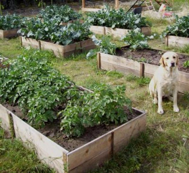 DIY Garden Beds - $10 Cedar Raised Garden Beds - Easy Gardening Ideas for Raised Beds and Planter Boxes - Free Plans, Tutorials and Step by Step Tutorials for Building and Landscaping Projects - Update Your Backyard and Gardens With These Cheap Do It Yourself Ideas http://diyjoy.com/diy-garden-beds