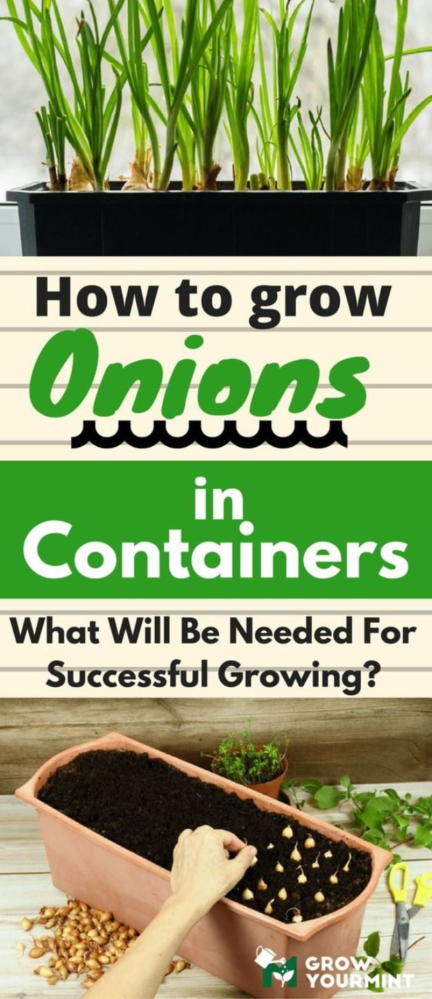 Container Gardening Ideas - Grow Onions In Containers - Easy Garden Projects for Containers and Growing Plants in Small Spaces - DIY Potting Tips and Planter Boxes for Vegetables, Herbs and Flowers - Simple Ideas for Beginners -Shade, Full Sun, Pation and Yard Landscape Idea tutorials http://diyjoy.com/container-gardening-ideas