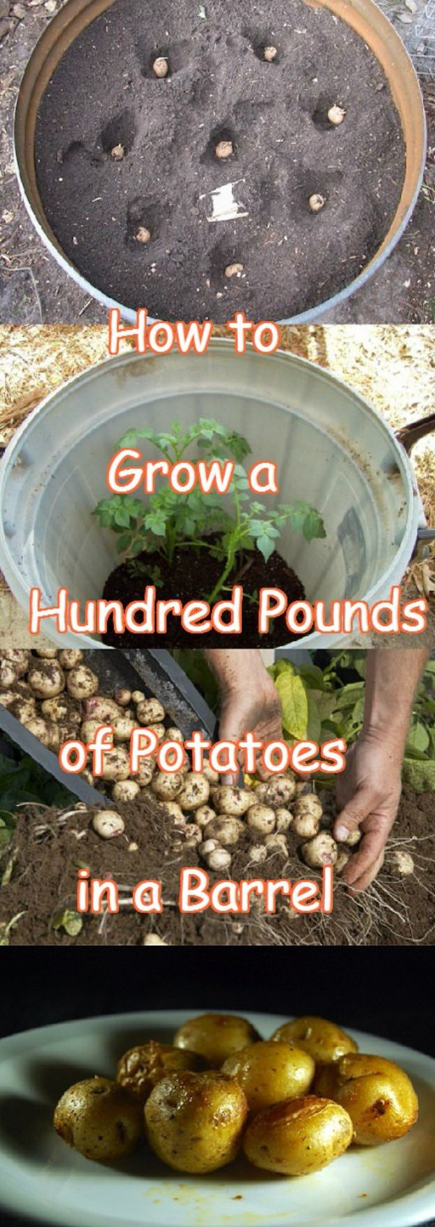 Container Gardening Ideas - Grow Potatoes In A Barrel - Easy Garden Projects for Containers and Growing Plants in Small Spaces - DIY Potting Tips and Planter Boxes for Vegetables, Herbs and Flowers - Simple Ideas for Beginners -Shade, Full Sun, Pation and Yard Landscape Idea tutorials http://diyjoy.com/container-gardening-ideas