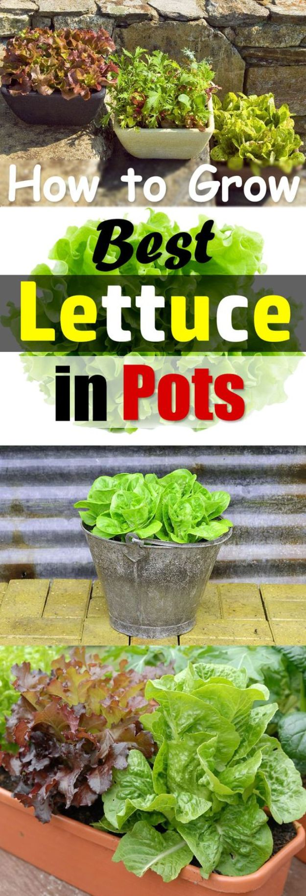 Container Gardening Ideas - Growing Lettuce In Containers - Easy Garden Projects for Containers and Growing Plants in Small Spaces - DIY Potting Tips and Planter Boxes for Vegetables, Herbs and Flowers - Simple Ideas for Beginners -Shade, Full Sun, Pation and Yard Landscape Idea tutorials http://diyjoy.com/container-gardening-ideas