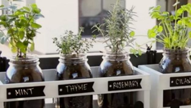 Container Gardening Ideas - Mason Jar Herb Garden - Easy Garden Projects for Containers and Growing Plants in Small Spaces - DIY Potting Tips and Planter Boxes for Vegetables, Herbs and Flowers - Simple Ideas for Beginners -Shade, Full Sun, Pation and Yard Landscape Idea tutorials http://diyjoy.com/container-gardening-ideas