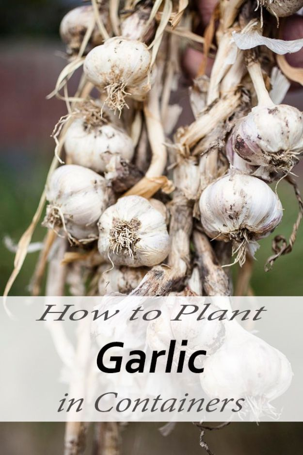 Container Gardening Ideas - Plant Garlic in Containers - Easy Garden Projects for Containers and Growing Plants in Small Spaces - DIY Potting Tips and Planter Boxes for Vegetables, Herbs and Flowers - Simple Ideas for Beginners -Shade, Full Sun, Pation and Yard Landscape Idea tutorials