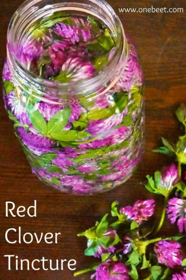 DIY Home Remedies - Red Clover Tincture - Homemade Recipes and Ideas for Help Relieve Symptoms of Cold and Flu, Upset Stomach, Rash, Cough, Sore Throat, Headache and Illness - Skincare Products, Balms, Lotions and Teas