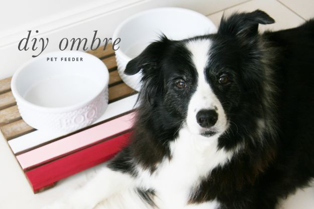 DIY Pet Bowls And Feeding Stations - Ombre DIY Dog Feeder - Easy Ideas for Serving Dog and Cat Food, Ways to Raise and Store Bowls - Organize Your Dog Food and Water Bowl With These Cute and Creative Ideas for Dogs and Cats- Monogram, Painted, Personalized and Rustic Crafts and Projects http://diyjoy.com/diy-pet-bowls-feeding-station