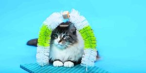 You Can Easily Make A Self Petting Station For Your Fur Baby. Learn How!