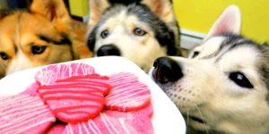 Don't Forget Your Canine Friends Need Valentine's Treats Too, So Watch What She Does!
